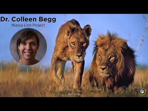 Niassa Lion Project · Dr. Colleen Begg · Expo 2014