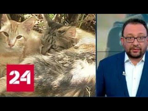 Зоозащитнику грозит реальный срок за спасение замурованных кошек - Россия 24 - Смотреть видео онлайн
