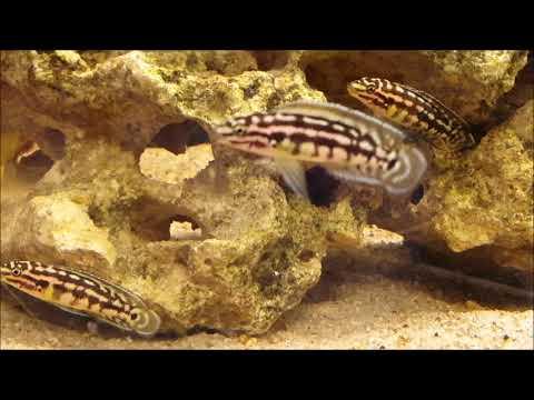 10 Fische für Aquarien ab 100-200 Liter | Teil 1
