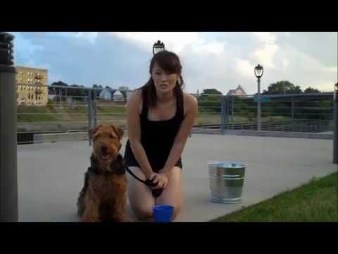 AEL's Ice Bucket Challenge: Amanda & Harry