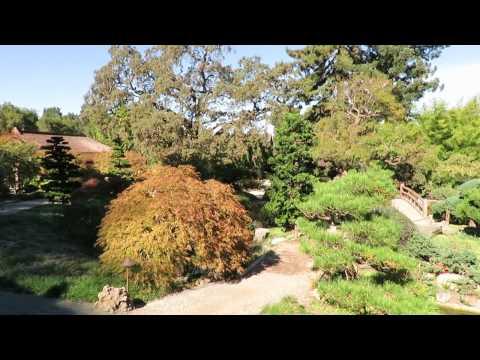 Bunny - Hakone Gardens - Saratoga, California