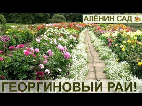 Георгиновый рай! / Коллекция георгин Латвийского университета
