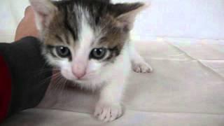 6) black-white cat male (черно-белый кот)