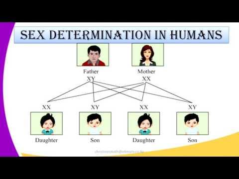FORM4 BIOLOGY LESSON7 GENETICS SEX DETERMINATION IN HUMANS