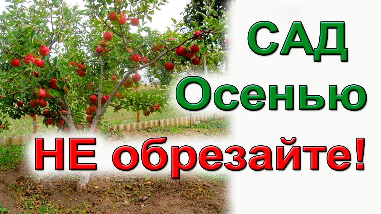 Не погубите деревья обрезкой! Почему нельзя обрезать садовые деревья осенью