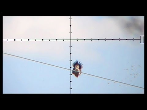 100 Yard Dove Shot - Dove Hunting with Edgun Matador PCP Air Rifle (Nov 6, 2011)