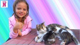 Кошки и Котята Видео для Детей Funny Cats Kittens Смешные животные VLOG Милые котята