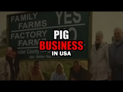 Pig Business in USA