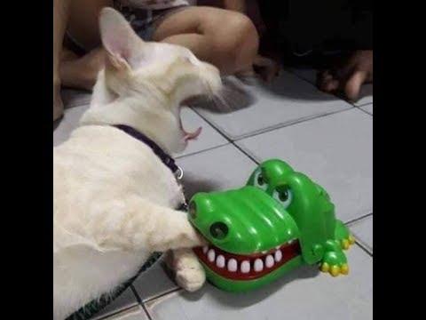 2019「絶対笑う」最高におもしろ犬,猫,動物のハプニング, 失敗画像集 2