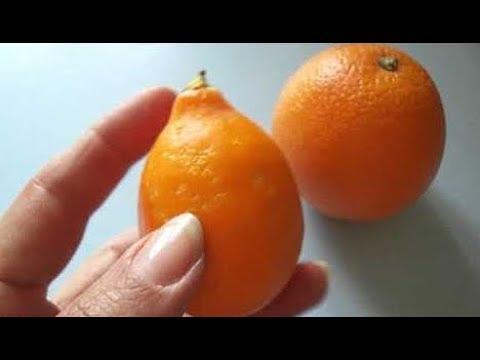 Ташкентский   оранжевый лимон зацвел  через 2 года и 4 месяца после укоренения черенка.