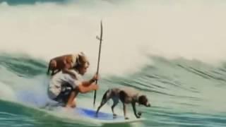 Собаки тоже любят сёрфинг