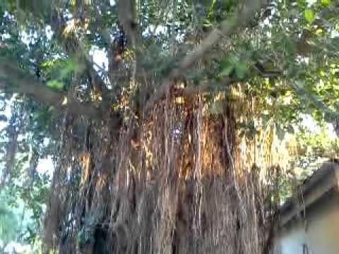 Malwa resort. Mandu.M.P