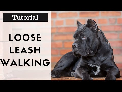How To Train Your Dog To Walk On A Leash Properly Without Pulling Tutorial