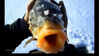 Первый лед. Зимняя рыбалка. Как поймать карпа зимой...