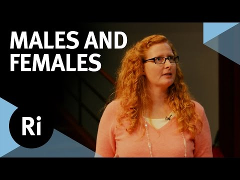 The Evolution of Males and Females - with Judith Mank