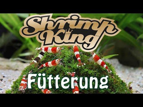 ShrimpKing Fütterung