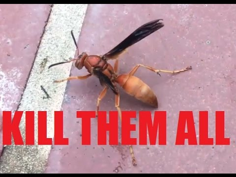 epic war texas red wasp hornet nest kill compilation slow mo