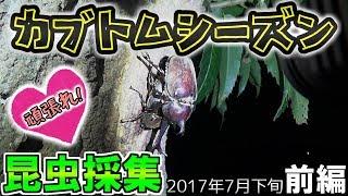 カ ブ ト ム シ - ズ ン 到 来 ! 【2017年昆虫採集(カブクワ)プレイリ...