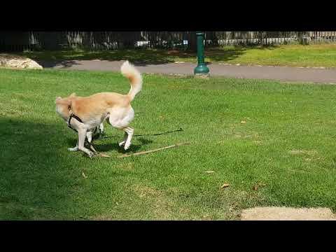 התנהגות כמראה לנפש - על החשיבות של חופש ביטוי לכלבים