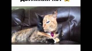 видео Старейший кот – звезда соцсетей