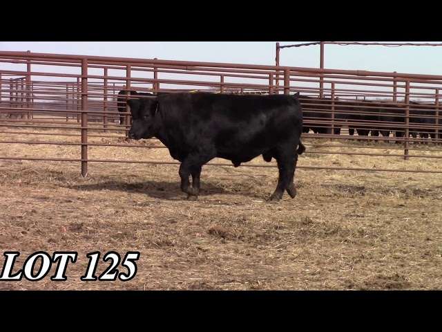 Mead Angus Farms Lot 125