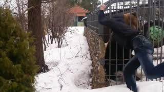 Фото мужик лезет к медведю в клетку
