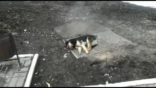 Жареная собака)))