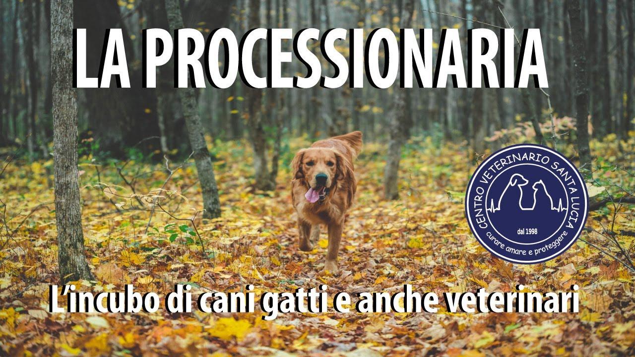 Domande Al Veterinario Cane i consigli del vostro vet   centro veterinario santa lucia