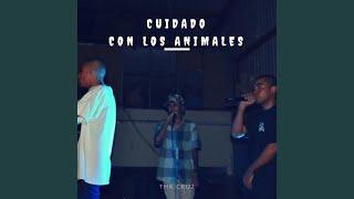 Cuidado Con los Animales