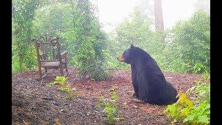 Rocking Chair Bears