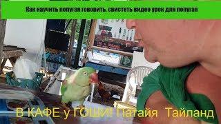 Как научить попугая говорить, свистеть видео урок для попугая 👀 В КАФЕ у ГОШИ!