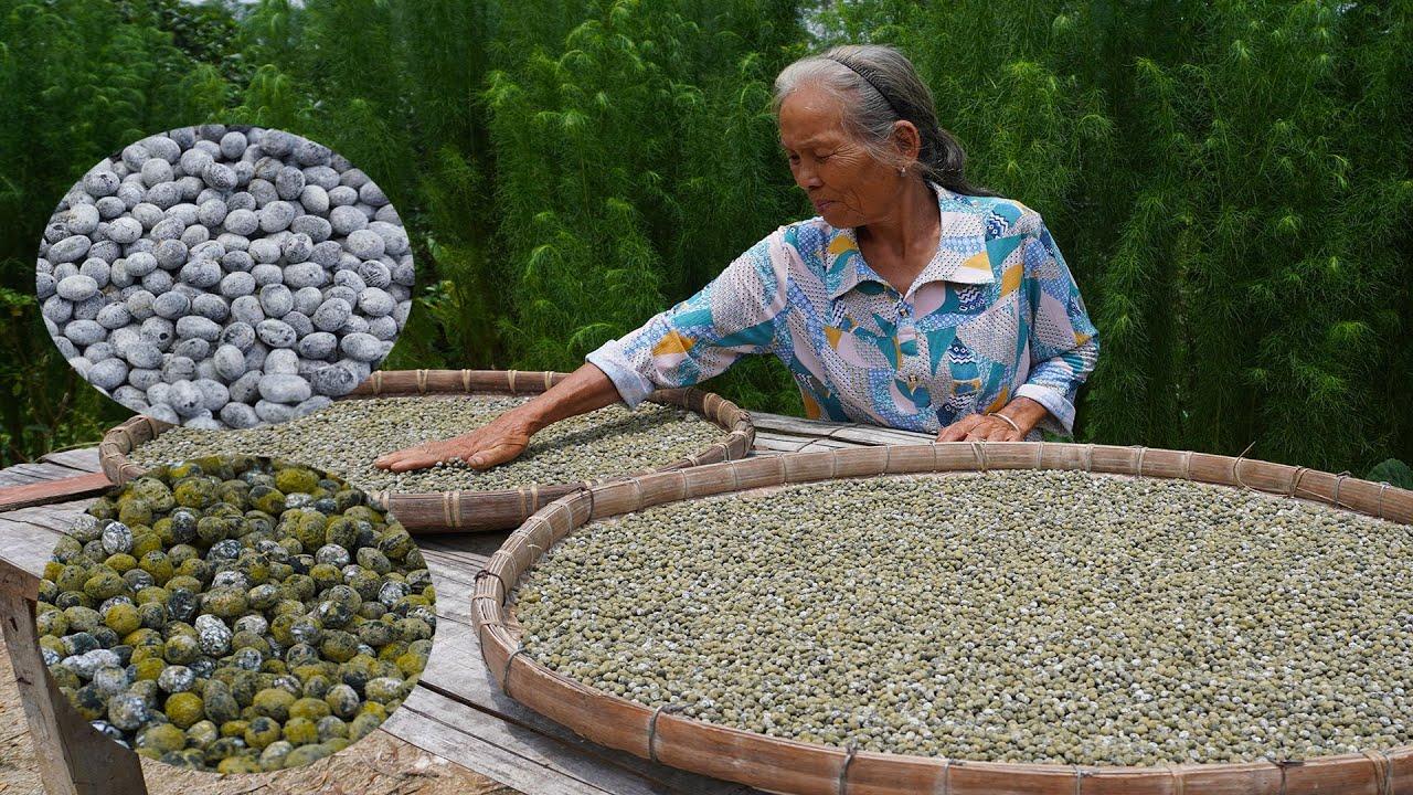 發霉的豆子還能吃?傳統豆豉的做法,老一輩傳下來的智慧 Guangxi grandmother making traditional tempeh 广西 美食  玉林阿婆