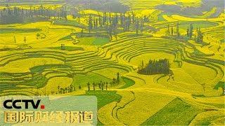 [国际财经报道] 云南罗平:七彩花海 风景如画 | CCTV财经