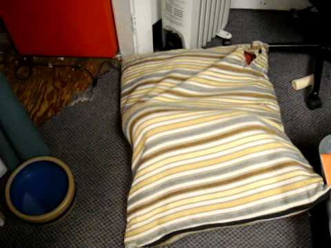 Dachshund burrows into dog bed