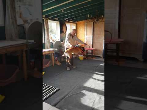 Spectacle de chien Kentra la championne Cerceau Fixe/ Cerceau Anneau