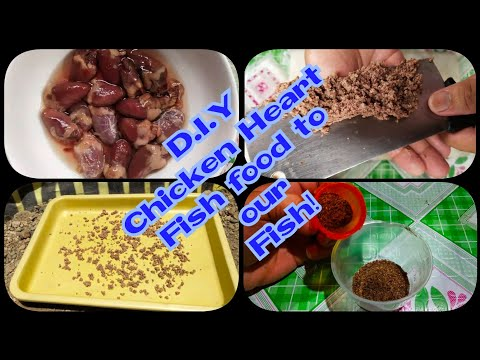 D.I.Y Chicken Heart Fish Food To Our Fish! (Granules Size)