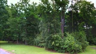 Buy Land North Carolina, Cheap Land Sale