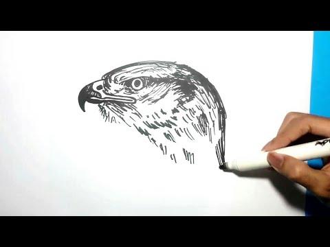 70 Gambar Burung Elang Dari Pensil HD Terbaru