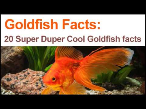 20 Goldfish Facts About Your Favorite Fish