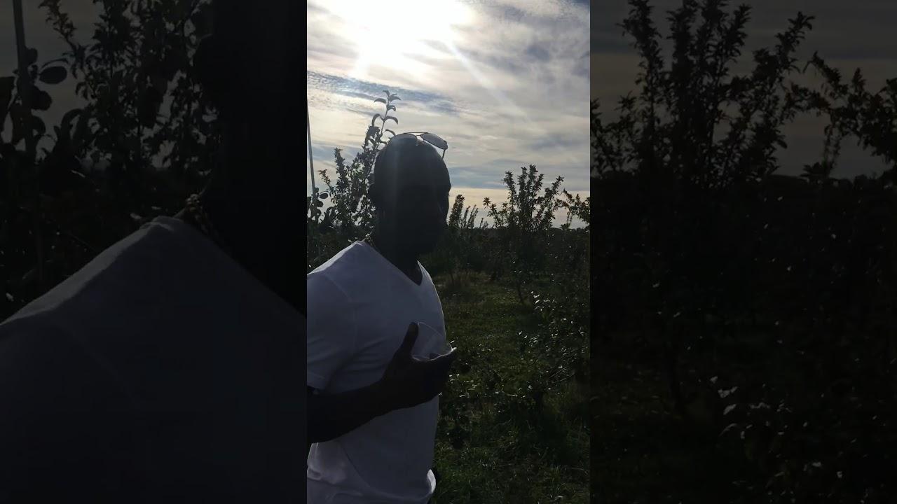 apple dave u0027s orchard youtube