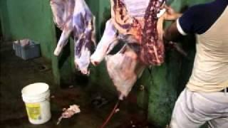 despostando una vaca