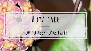 Hoya care: how to keep Hoya plants happy