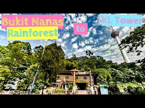Trekking Bukit Nanas, the LAST rainforest in Kuala Lumpur to KL Tower [Small Girl Big World]