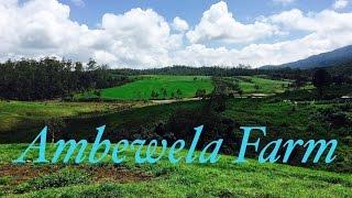 Ambewela  Farm Nuwara Eliya