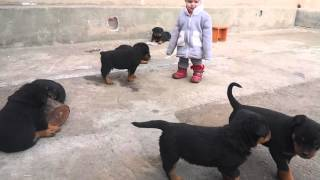 Щенки ротвейлера 1,5 мес и ребенок 1,3 года