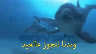 بدنا نتجوز عالعيد موسيقى كاريوكى مصر 01224919053