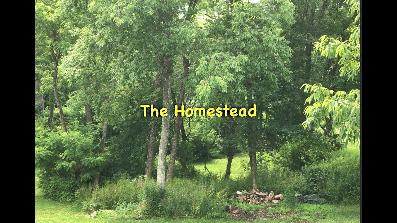 The Homestead- No Pain No Gain