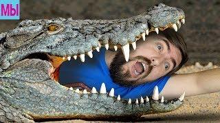 Семья играет MOPE IO все животные видео МОРЕ ИО ПРИКОЛЫ убегаем от крокодила нас съел ЧЕРНЫЙ ДРАКОН