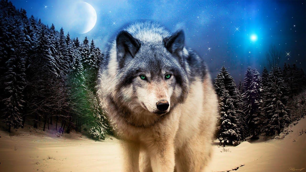 картинки про волков на телефон тому все девушки