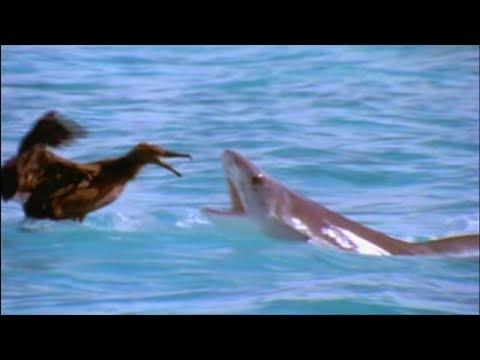 The Shark Paradise - documentary